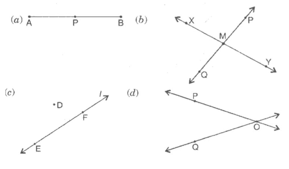 Draw a rough figure and label suitably in each of the following cases: (a) Point P lies on AB. (b) XY and PQintersect at M. (c) Line lcontains E and F but not D. (d) OPand OQ meet at O.