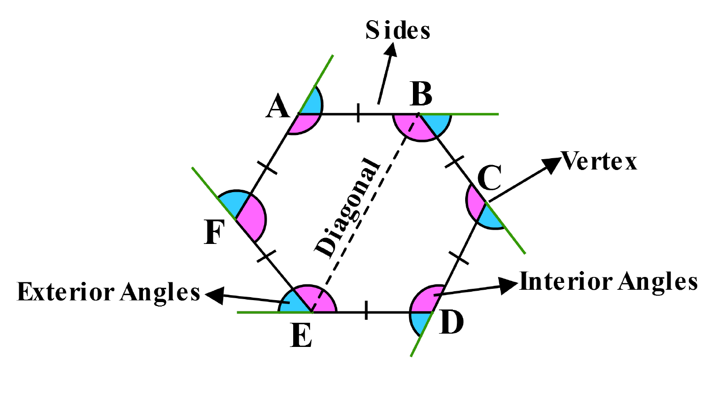 a hexagon marked with sides,vertex,sides,diagonal and its angles