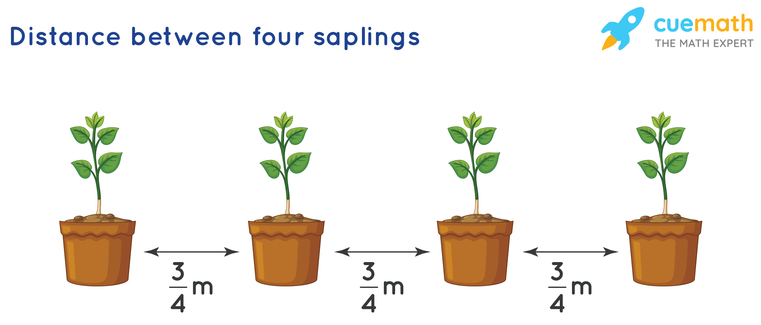 The distance between two adjacent saplings is 3/4 m