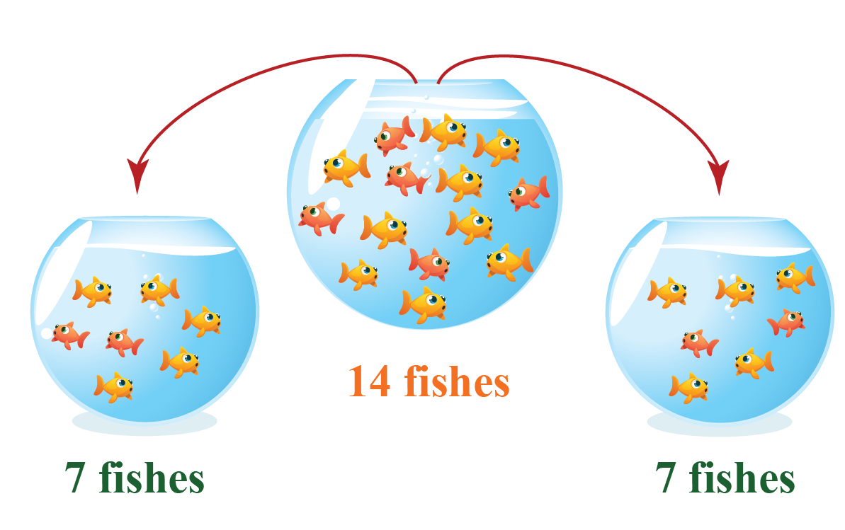 grouping 14 fishes from a larger bowl into 2 smaller bowls showing division as repeated subtraction