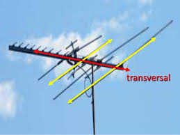 antenna is an example of transversal lines