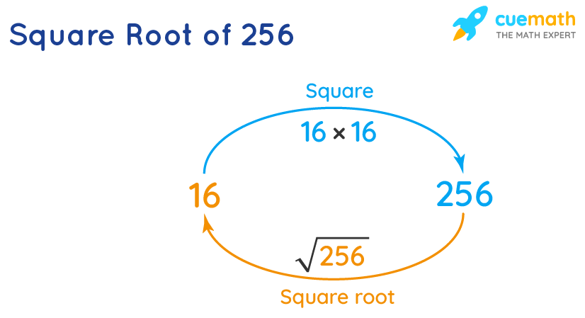 square root of 256 is the inverse of squaring 16