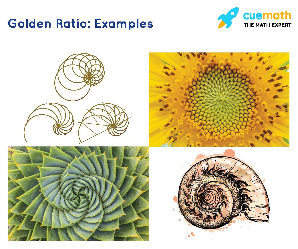golden ratioexamples in nature