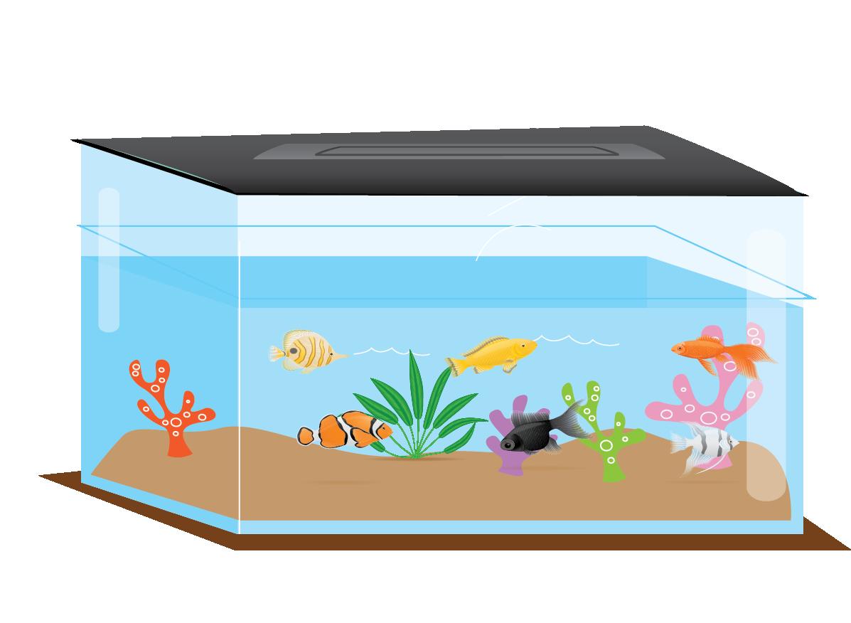 Fish Tank: An example of rectangular prism