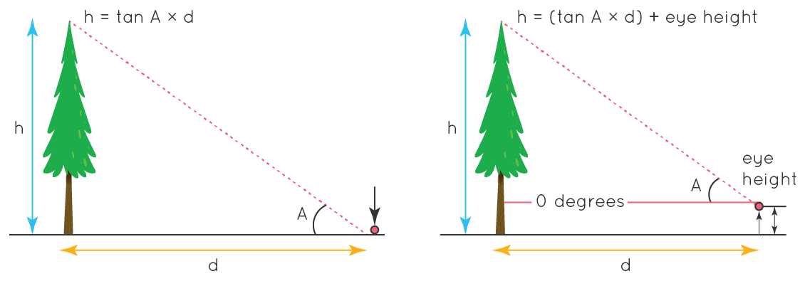How to measure the height of a tree using trigonometry?