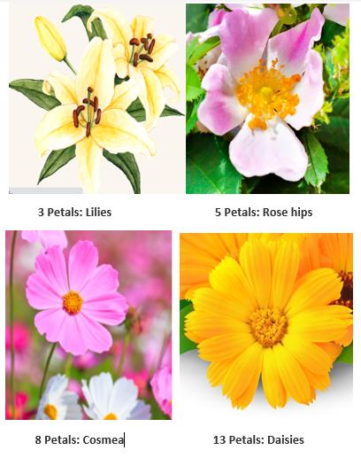 Lilies roses, petals, daisies