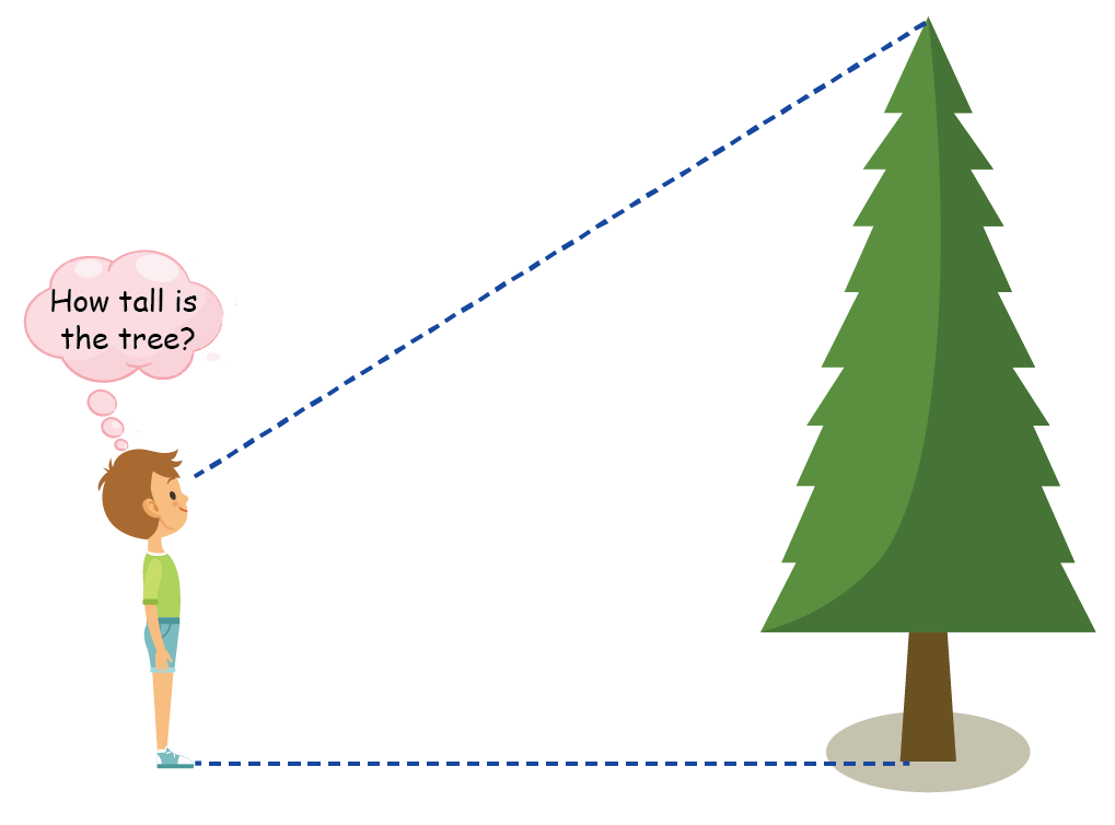 example of a boy looking at a tree wondering its height