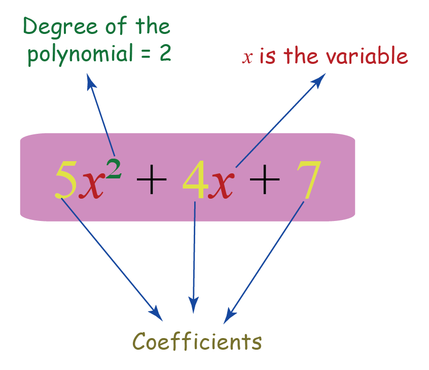 figure showing a polynomial with its degree, variable and coefficients