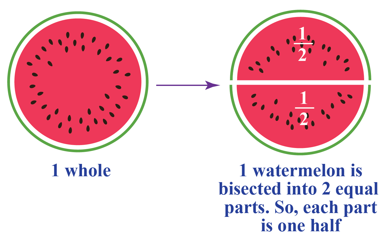 Illustration of bisection of a watermelon
