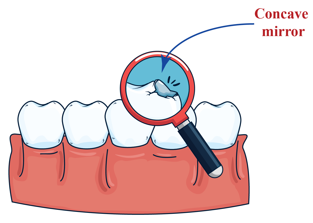 A concave mirror is used to view a larger image of the teeth.