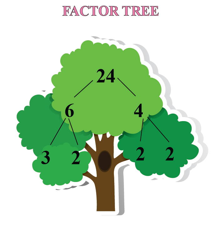Factors of 24 - Finding factors in a factor tree. The factors are represented in the form of branches of a tree.