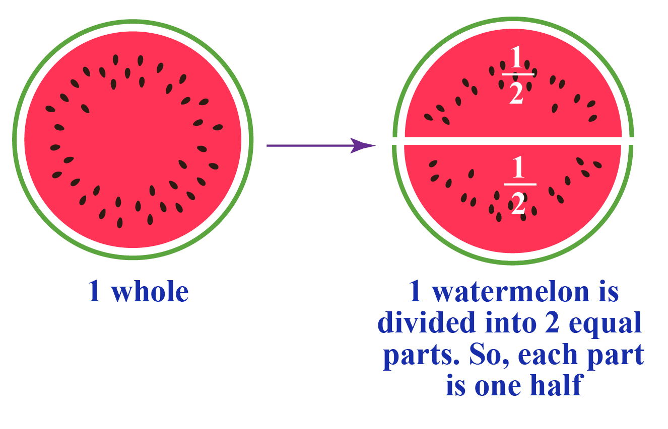 When one unit is divided in equal parts, then each unit is represented by a fractional number. A watermelon is divided into two equal halves to show the fraction 1 by 2.