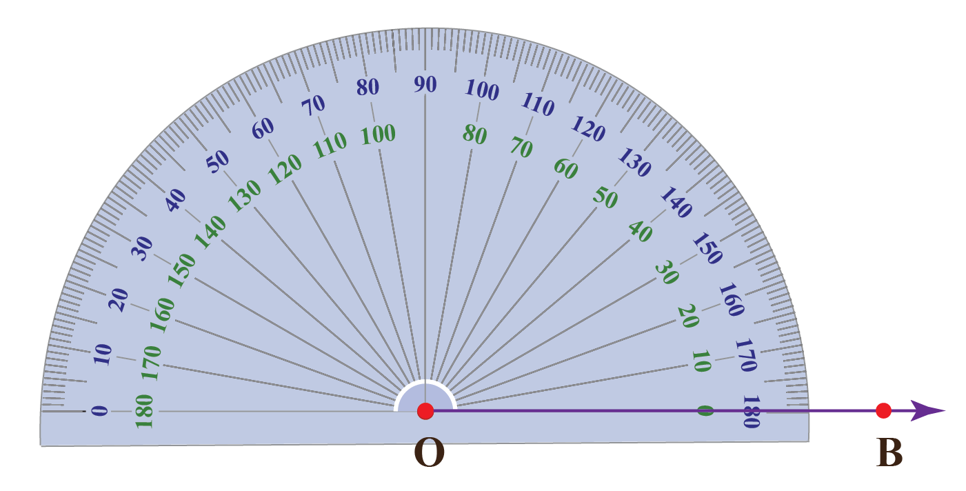Align the protractor with the ray OB