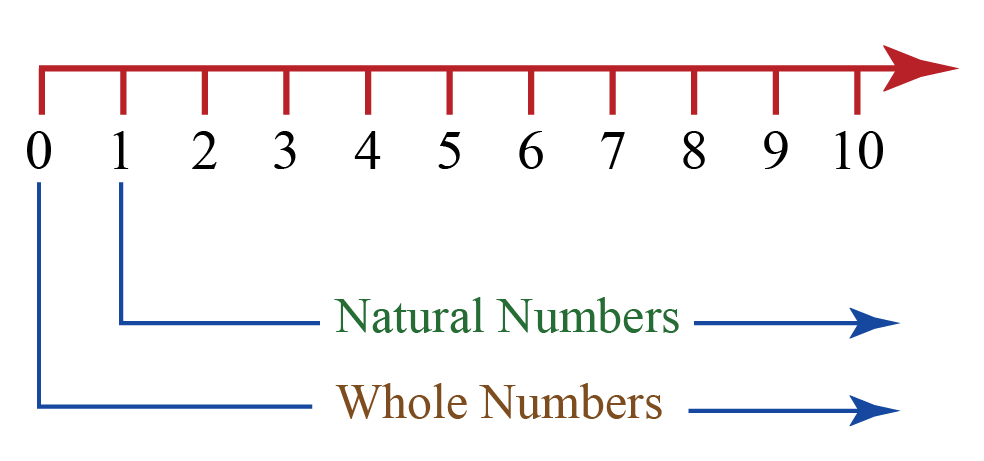 Numberline showing whole and natural numbers
