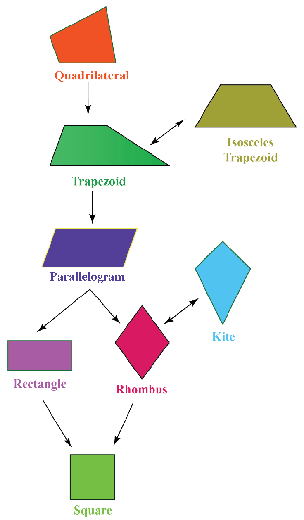 Properties of quadrilaterals: Quadrilaterals chart hierarchy