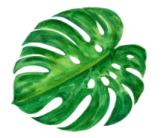 axis of symmetry in leaf