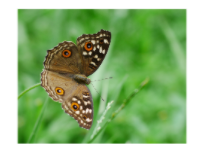 axis of symmetry in a butterfly