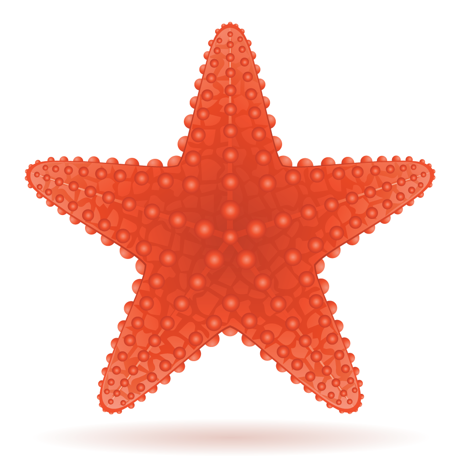 Examples of Symmetry in Real Life - A starfish is shown as an example for rotational symmetry.