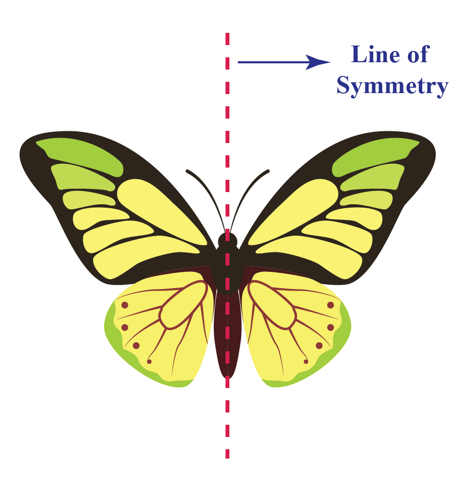 Symmetrical Objects in Real Life - A butterfly is an example of a symmetrical object found in nature.