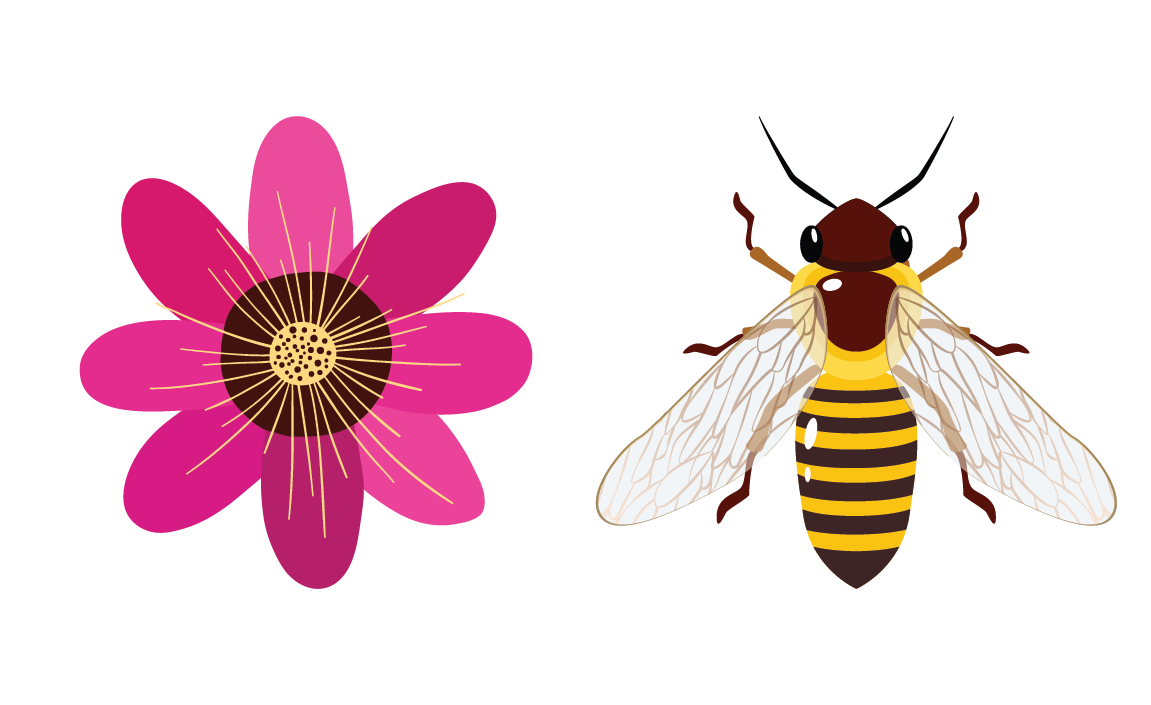 Symmetry in Math - Flowers, leaves, and bees are some examples of objects found in nature that have symmetrical patterns.