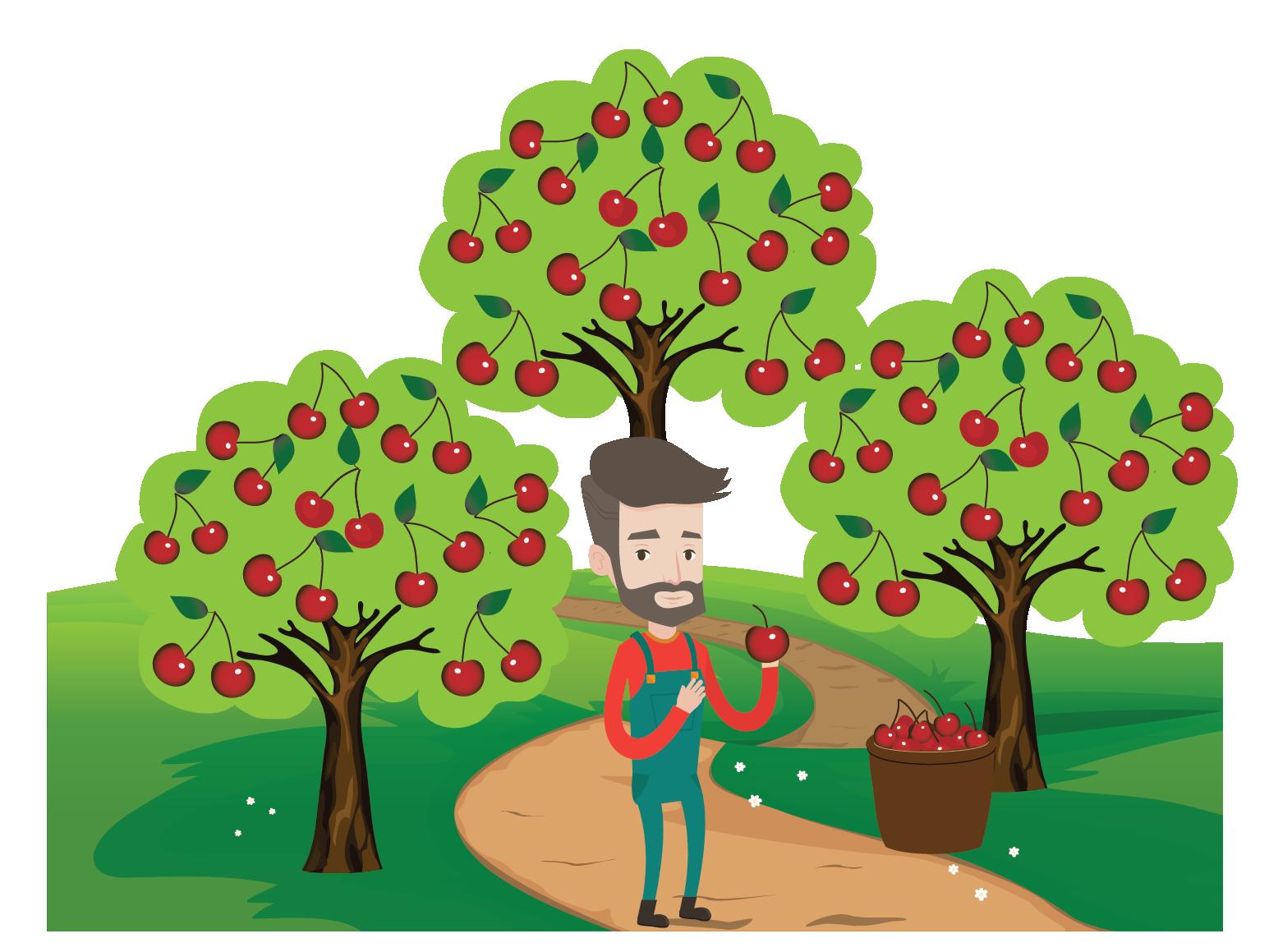 Histogram example of a cherry tree garden