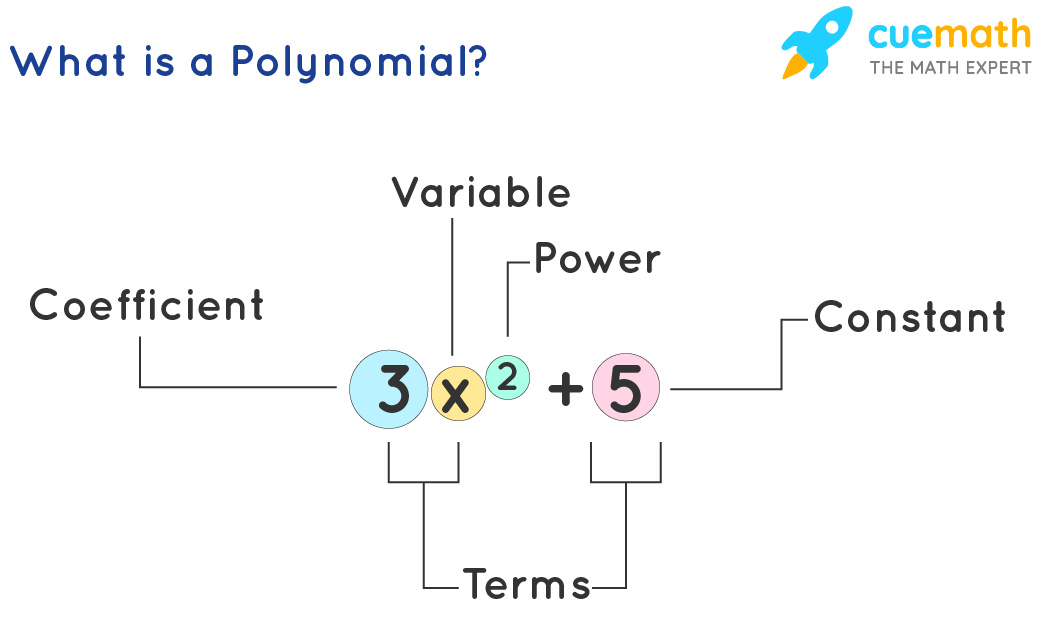 What is a Polynomial
